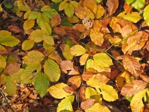 Descarga gratis fondos para diapositivas de naturaleza - Descargar autumn leaves ...