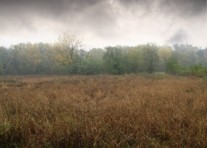 field-in-autumn-1411798-m