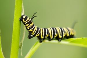 butterfly-1417828-m
