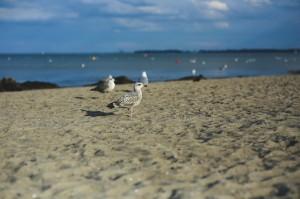 sea-bird-beach-sand-large