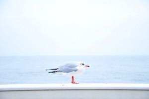 sea-bird-ocean-animal-large