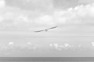 sea-black-and-white-flight-sky-large