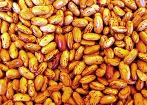beans-1562355 copia